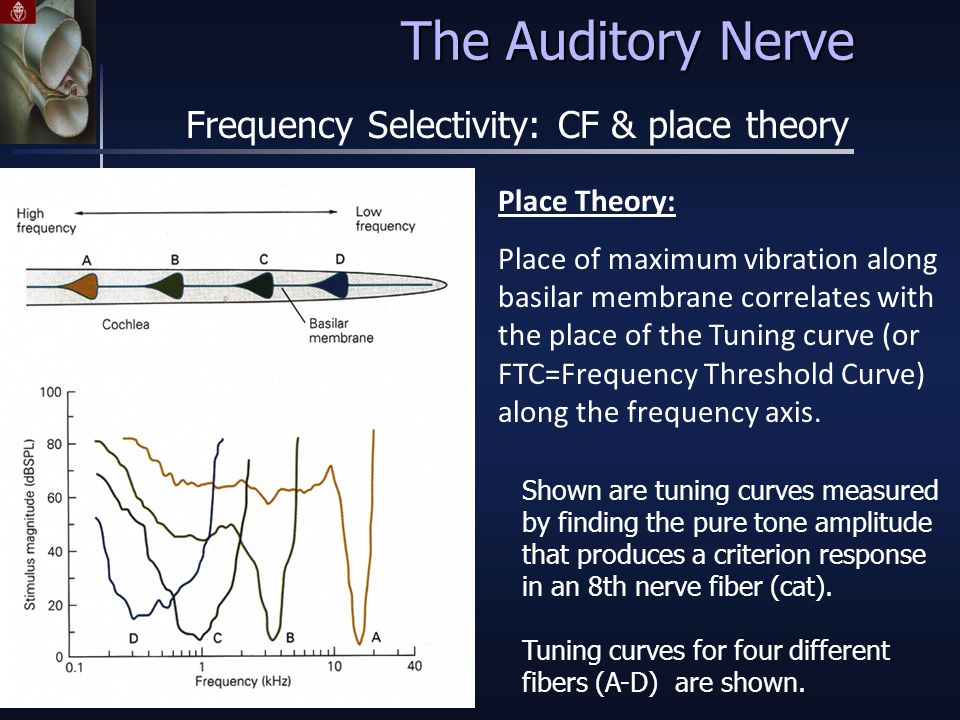 Place Theory: Place of maximum vibration along basilar membrane correlates with the place of the Tuning curve (or FTC=Frequency Threshold Curve) along the frequency axis.