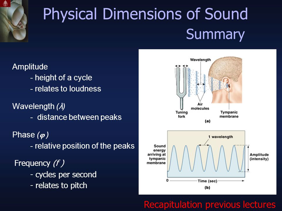 Physical Dimensions of Sound Amplitude - height of a cycle - relates to loudness Wavelength ( λ ) - distance between peaks Phase (  ) - relative position of the peaks Frequency (f ) - cycles per second - relates to pitch Summary Recapitulation previous lectures