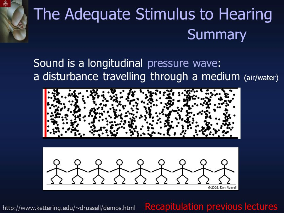 Sound is a longitudinal pressure wave: a disturbance travelling through a medium (air/water) The Adequate Stimulus to Hearing http://www.kettering.edu/~drussell/demos.html Recapitulation previous lectures Summary