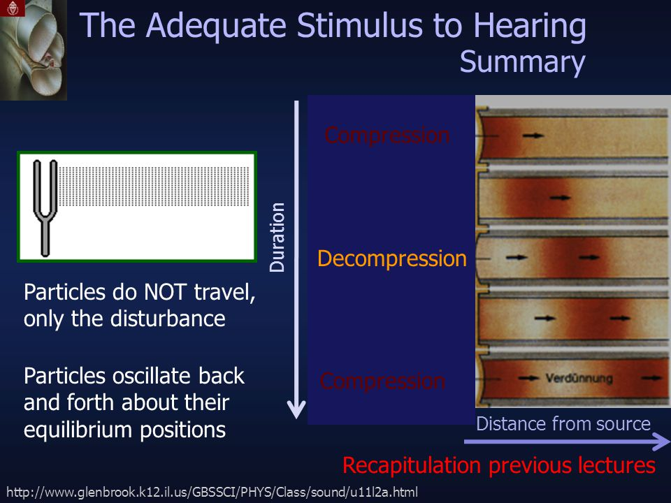 The Adequate Stimulus to Hearing http://www.glenbrook.k12.il.us/GBSSCI/PHYS/Class/sound/u11l2a.html Particles do NOT travel, only the disturbance Particles oscillate back and forth about their equilibrium positions Distance from source Duration Recapitulation previous lectures Summary Compression Decompression Compression