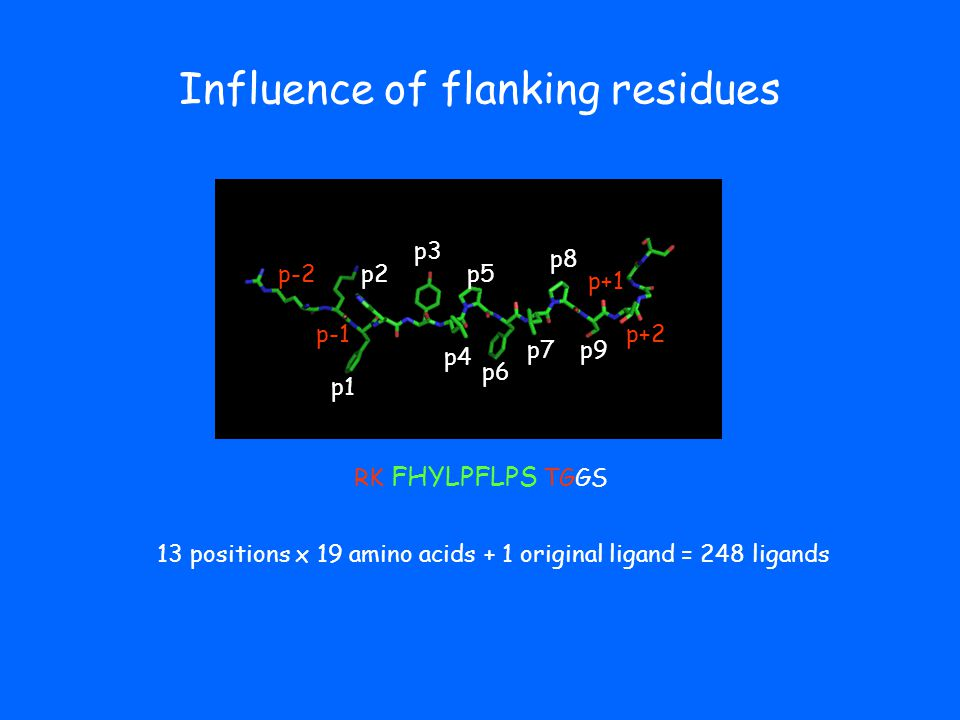 Influence of flanking residues p1 p2 p3 p4 p5 p6 p7 p8 p9 RK FHYLPFLPS TGGS 13 positions x 19 amino acids + 1 original ligand = 248 ligands p-1 p-2 p+1 p+2