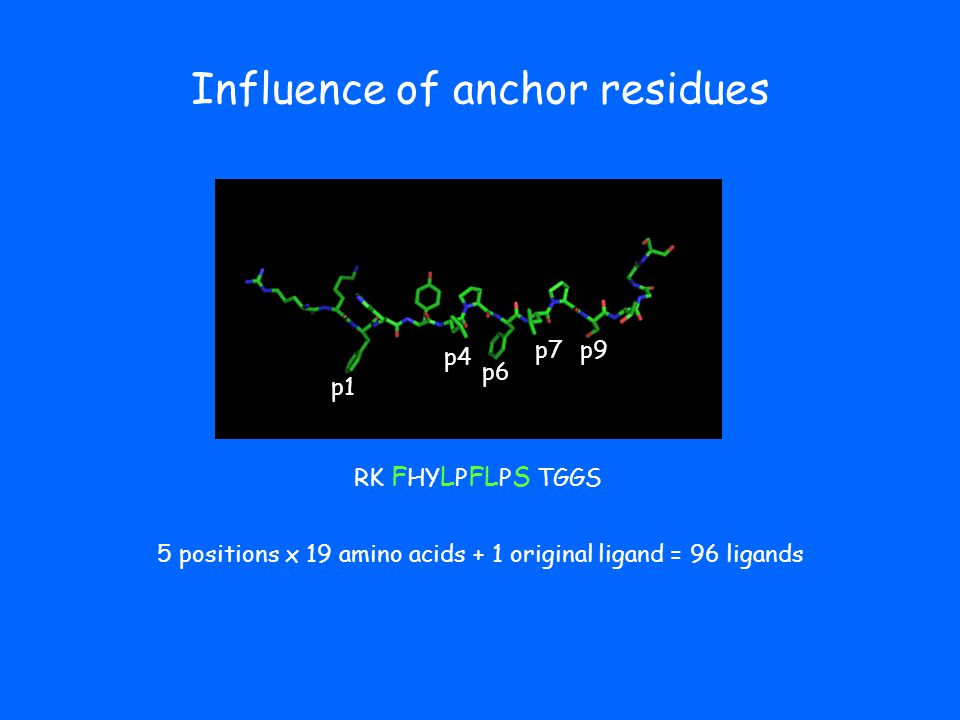 Influence of anchor residues p1 p4 p6 p9 RK F HY L P FL P S TGGS 5 positions x 19 amino acids + 1 original ligand = 96 ligands p7