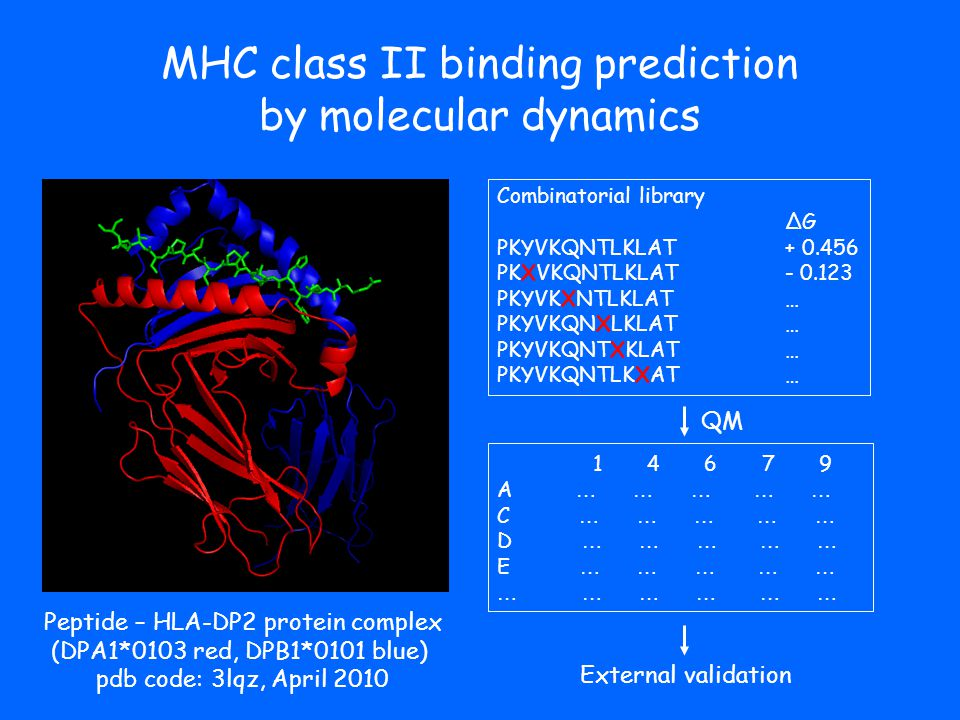 MHC class II binding prediction by molecular dynamics Combinatorial library ΔG PKYVKQNTLKLAT + 0.456 PKXVKQNTLKLAT - 0.123 PKYVKXNTLKLAT … PKYVKQNXLKLAT … PKYVKQNTXKLAT … PKYVKQNTLKXAT … 1 4 6 7 9 A … … … … … C … … … … … D … … … … … E … … … … … … … … External validation QM Peptide – HLA-DP2 protein complex (DPA1*0103 red, DPB1*0101 blue) pdb code: 3lqz, April 2010