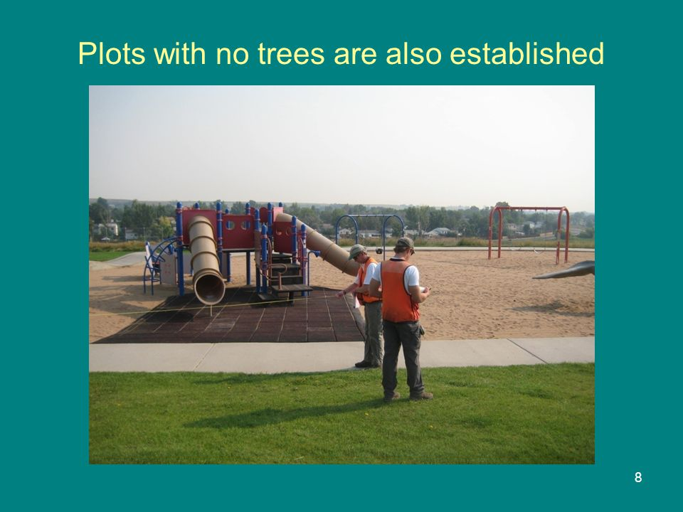 Plots with no trees are also established 8