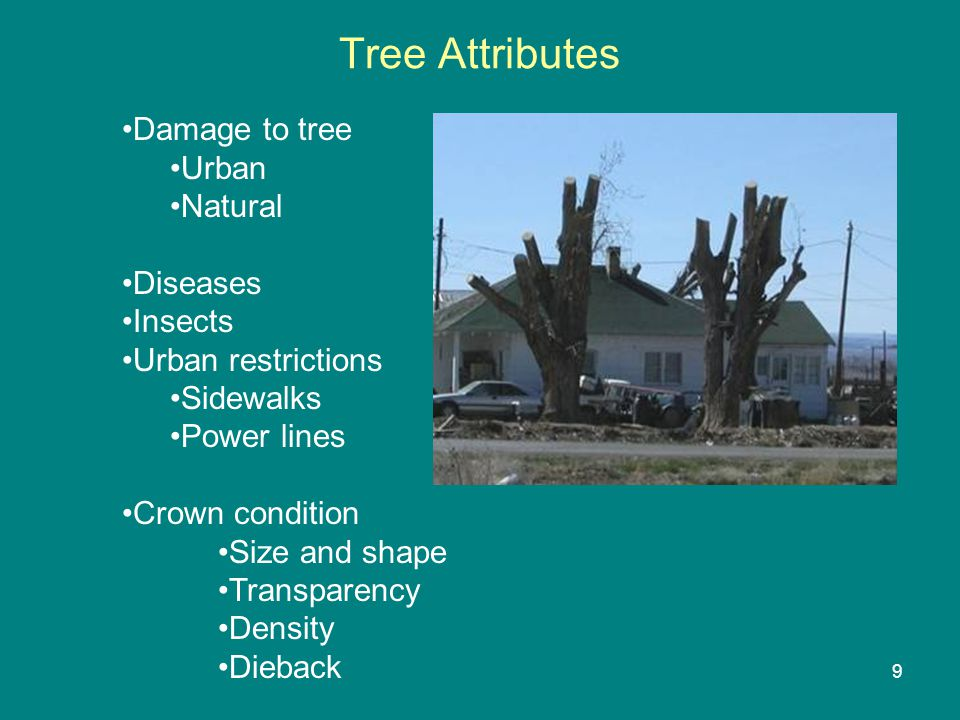 Tree Attributes Damage to tree Urban Natural Diseases Insects Urban restrictions Sidewalks Power lines Crown condition Size and shape Transparency Density Dieback Poor maintenance 9