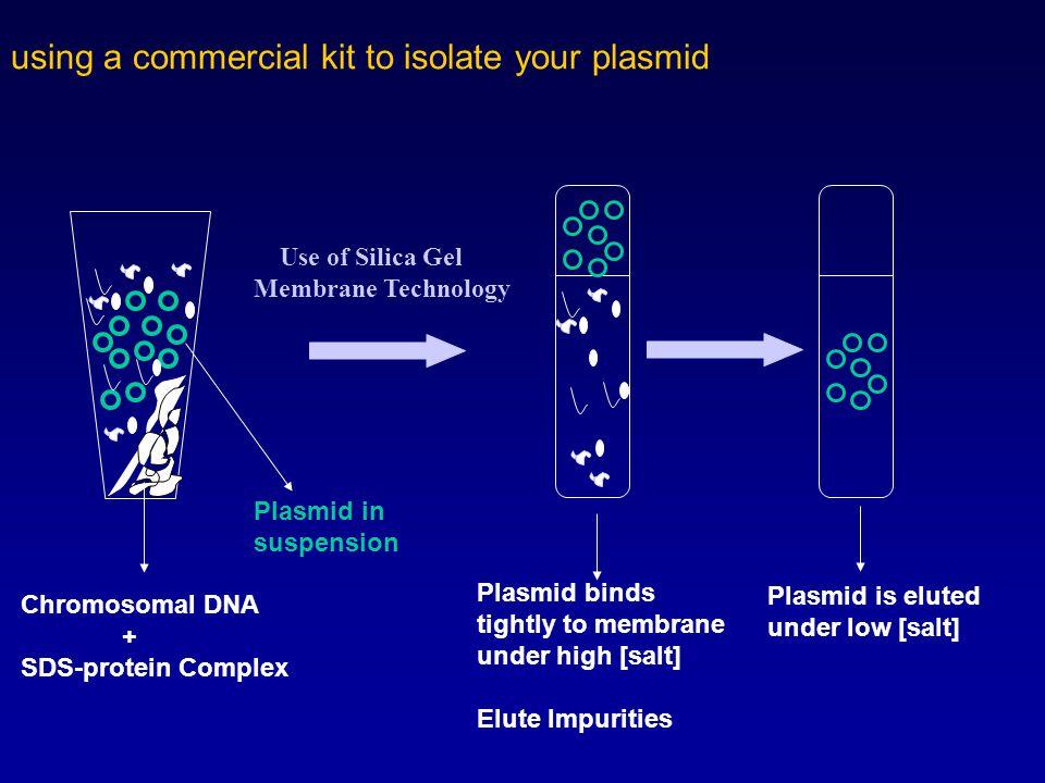 Plasmids Isolation of Plasmid DNA from Bacteria Properties