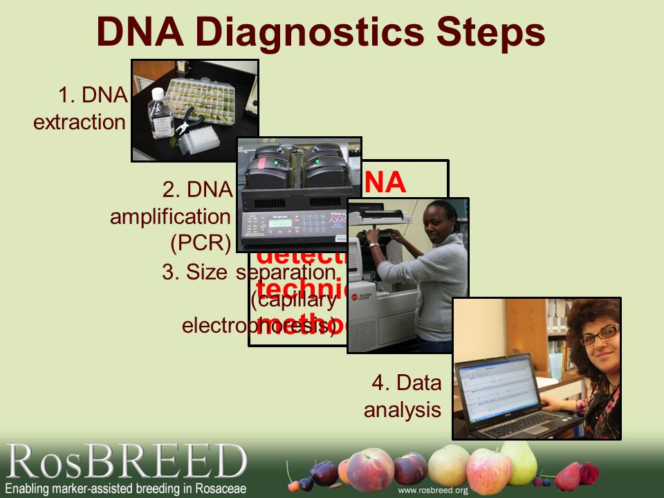 Other DNA marker detection techniques/ methods DNA Diagnostics Steps 1.
