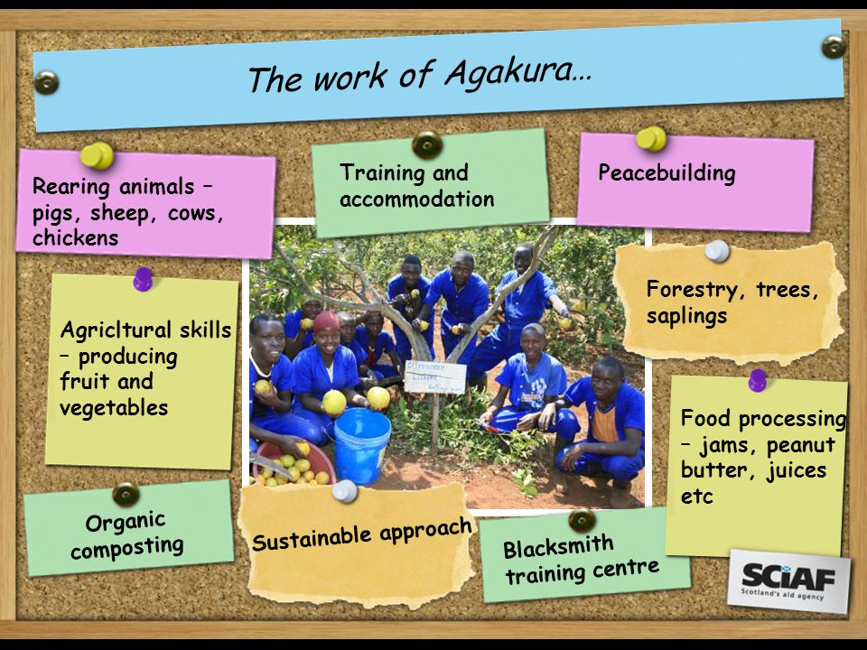 Rearing animals – pigs, sheep, cows, chickens Forestry, trees, saplings Agricltural skills – producing fruit and vegetables Food processing – jams, peanut butter, juices etc T h e w o r k o f A g a k u r a … Training and accommodation O r g a n i c c o m p o s t i n g Peacebuilding S u s t a i n a b l e a p p r o a c h B l a c k s m i t h t r a i n i n g c e n t r e