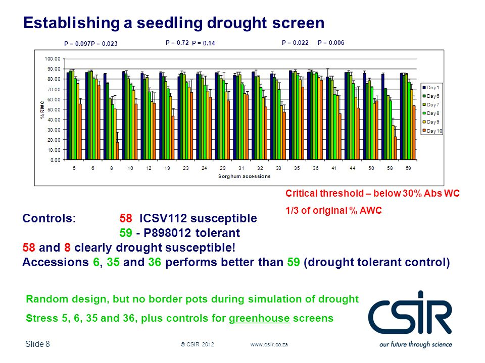 Slide 8 © CSIR 2012 www.csir.co.za Establishing a seedling drought screen Controls: 58 ICSV112 susceptible 59 - P898012 tolerant 58 and 8 clearly drought susceptible.