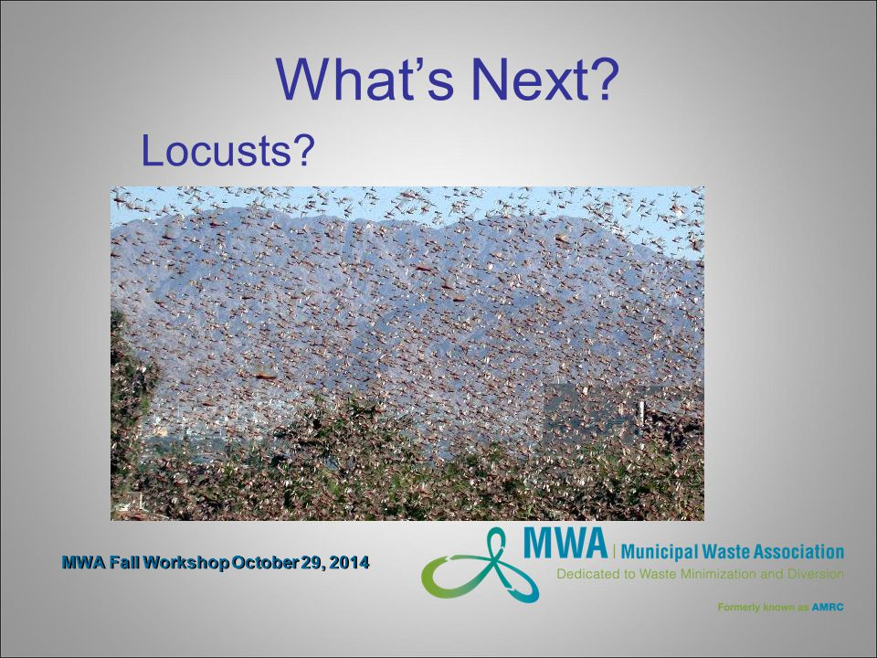 MWA Fall Workshop October 29, 2014 What's Next Locusts