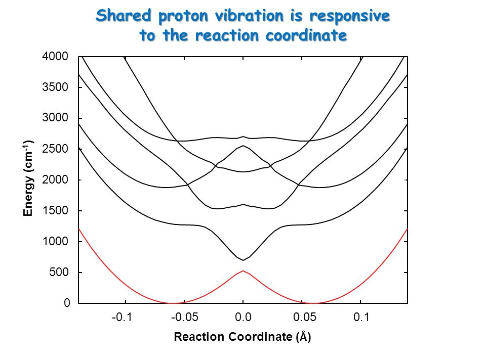 0 500 1000 1500 2000 2500 3000 3500 4000 -0.1-0.05 0.0 0.05 0.1 Reaction Coordinate ( Å ) Energy (cm -1 ) Shared proton vibration is responsive to the reaction coordinate