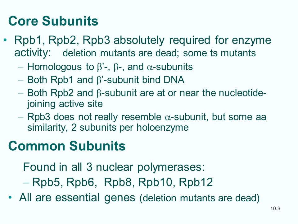 10-9 Core Subunits Rpb1, Rpb2, Rpb3 absolutely required for enzyme activity: deletion mutants are dead; some ts mutants –Homologous to  '-,  -, and  -subunits –Both Rpb1 and  '-subunit bind DNA –Both Rpb2 and  -subunit are at or near the nucleotide- joining active site –Rpb3 does not really resemble  -subunit, but some aa similarity, 2 subunits per holoenzyme Common Subunits Found in all 3 nuclear polymerases: –Rpb5, Rpb6, Rpb8, Rpb10, Rpb12 All are essential genes (deletion mutants are dead)