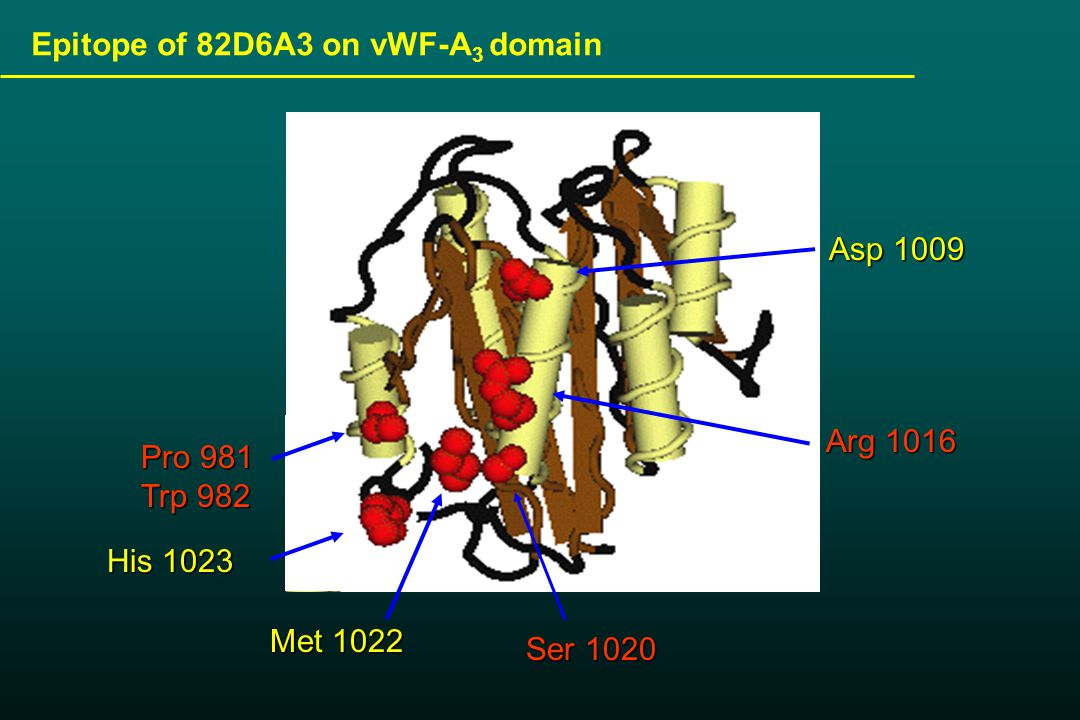 Pro 981 Trp 982 Met 1022 His 1023 Ser 1020 Asp 1009 Arg 1016 Epitope of 82D6A3 on vWF-A 3 domain