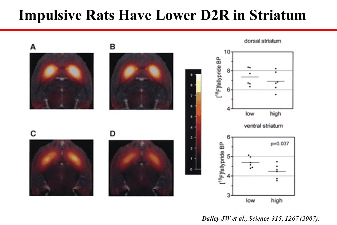 Dalley JW et al., Science 315, 1267 (2007). Impulsive Rats Have Lower D2R in Striatum