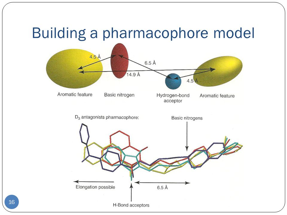Building a pharmacophore model 16