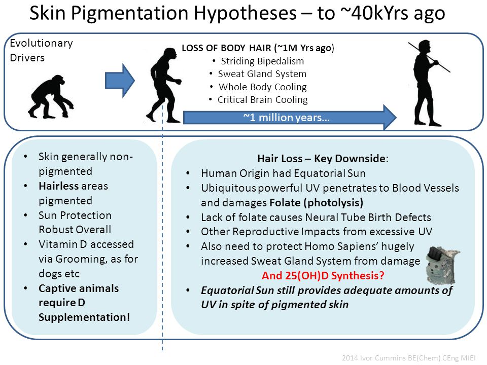 Skin Pigmentation Hypotheses – to ~40kYrs ago Evolutionary Drivers Skin generally non- pigmented Hairless areas pigmented Sun Protection Robust Overall Vitamin D accessed via Grooming, as for dogs etc Captive animals require D Supplementation.