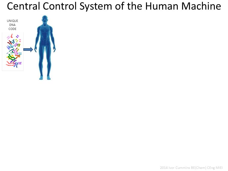 Central Control System of the Human Machine UNIQUE DNA CODE 2014 Ivor Cummins BE(Chem) CEng MIEI