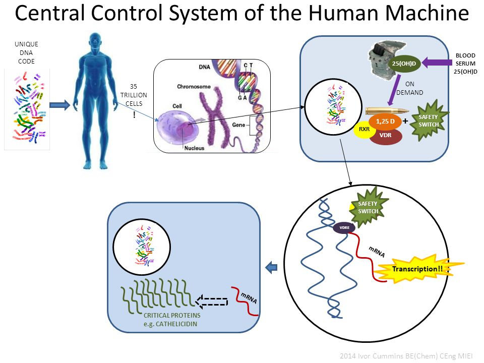 Central Control System of the Human Machine 35 TRILLION CELLS .