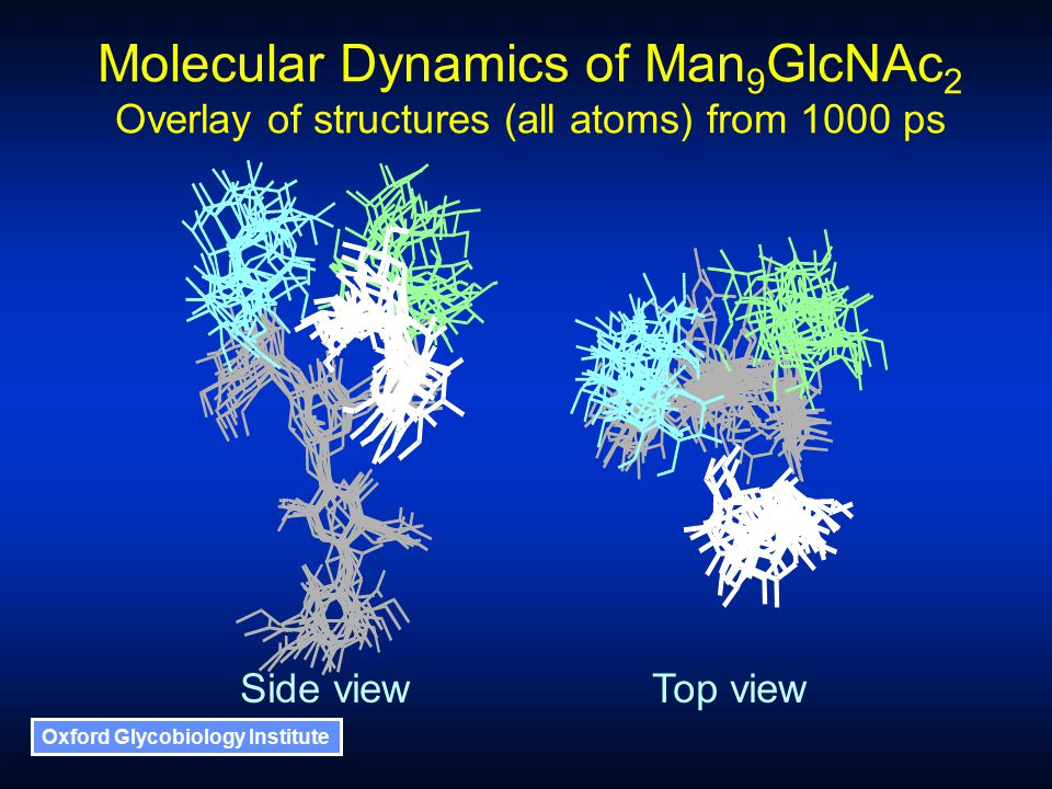 Oxford Glycobiology Institute Molecular Dynamics of Man 9 GlcNAc 2 Overlay of structures (all atoms) from 1000 ps Side viewTop view