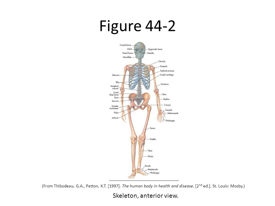Care Of The Patient With A Musculoskeletal Disorder Pn Ppt Download