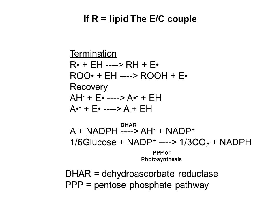 If R = lipid The E/C couple Termination R + EH ----> RH + E ROO + EH ----> ROOH + E Recovery AH - + E ----> A - + EH A - + E ----> A + EH A + NADPH ----> AH - + NADP + 1/6Glucose + NADP + ----> 1/3CO 2 + NADPH DHAR DHAR = dehydroascorbate reductase PPP = pentose phosphate pathway PPP or Photosynthesis
