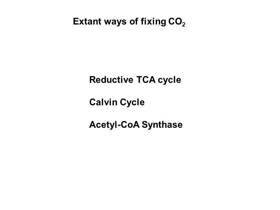 Extant ways of fixing CO 2 Reductive TCA cycle Calvin Cycle Acetyl-CoA Synthase