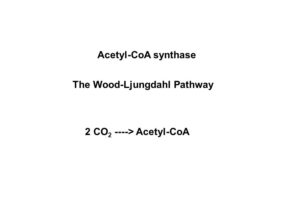 Acetyl-CoA synthase The Wood-Ljungdahl Pathway 2 CO 2 ----> Acetyl-CoA