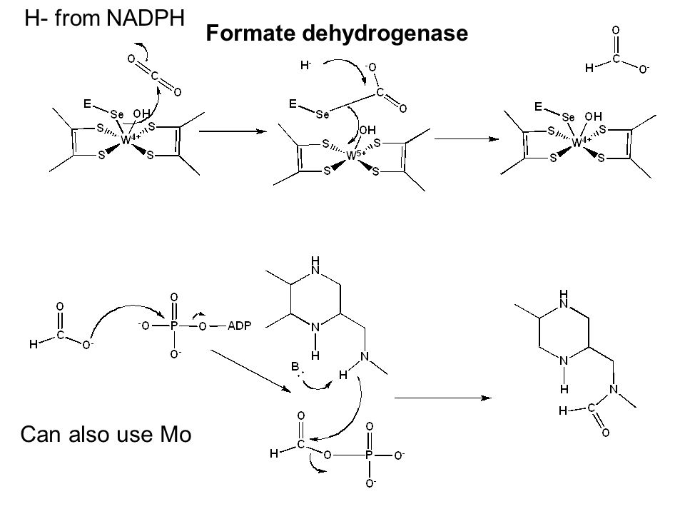 Formate dehydrogenase Can also use Mo H- from NADPH