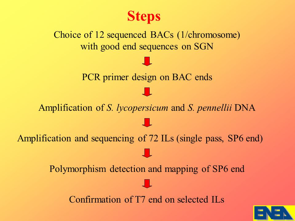Amplification and sequencing of 72 ILs (single pass, SP6 end) PCR primer design on BAC ends Steps Amplification of S.