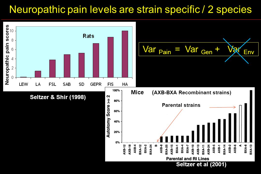 Neuropathic pain levels are strain specific / 2 species Var Pain = Var Gen + Var Env Neuropathic pain scores Seltzer et al (2001) Seltzer & Shir (1998) Mice ( AXB-BXA Recombinant strains) Parental strains
