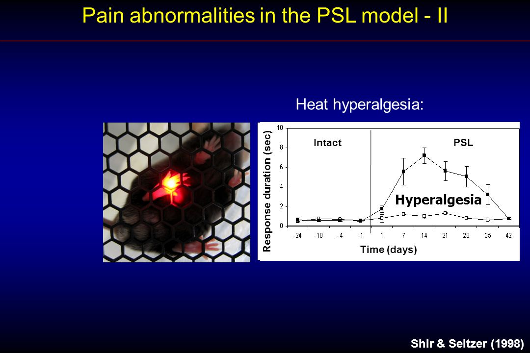 Pain abnormalities in the PSL model - II Shir & Seltzer (1998) BaselinePSL Response duration (sec) Time (days) IntactPSL Heat hyperalgesia: Hyperalgesia