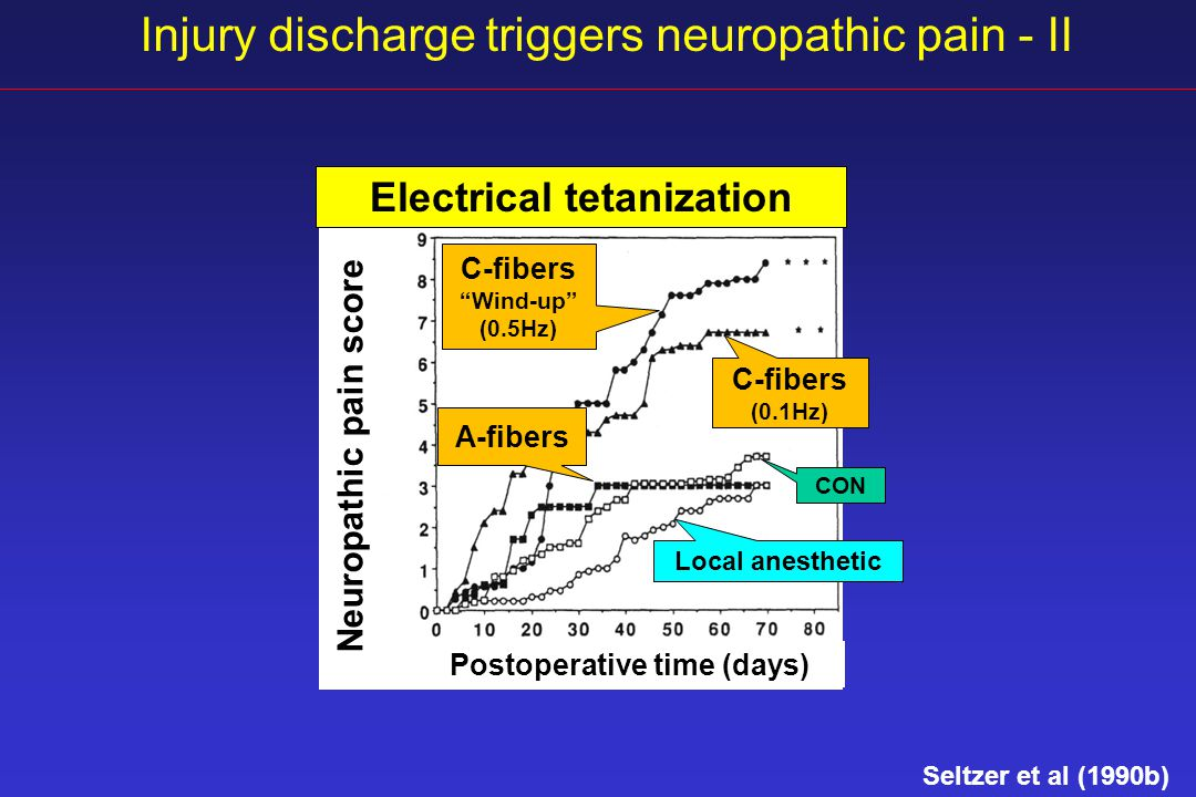 Injury discharge triggers neuropathic pain - II Electrical tetanization Postoperative time (days) C-fibers Wind-up (0.5Hz) C-fibers (0.1Hz) A-fibers CON Neuropathic pain score Local anesthetic Seltzer et al (1990b)