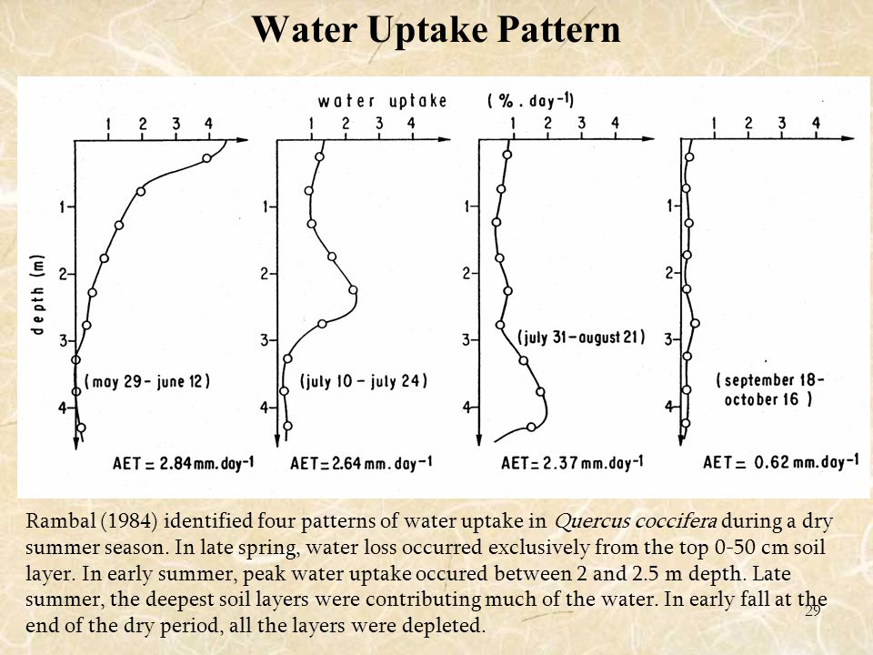 29 Water Uptake Pattern Rambal (1984) identified four patterns of water uptake in Quercus coccifera during a dry summer season.