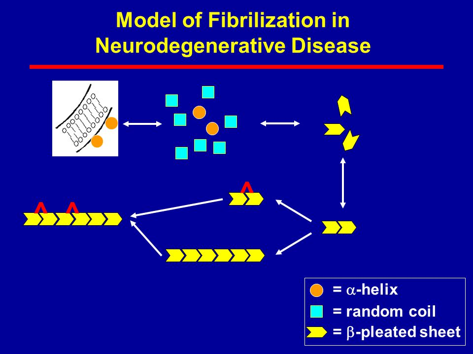 Model of Fibrilization in Neurodegenerative Disease =  -helix = random coil =  -pleated sheet ^^ ^