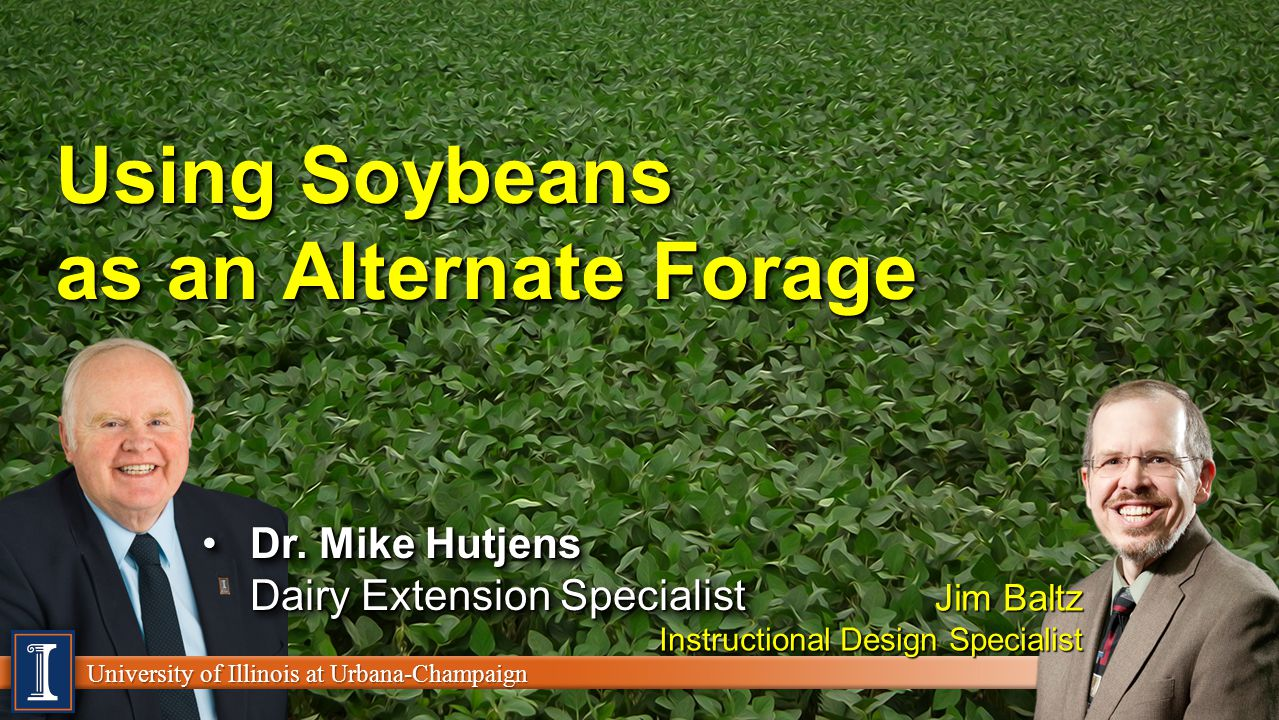 University of Illinois at Urbana-Champaign Using Soybeans as an Alternate Forage Dr.