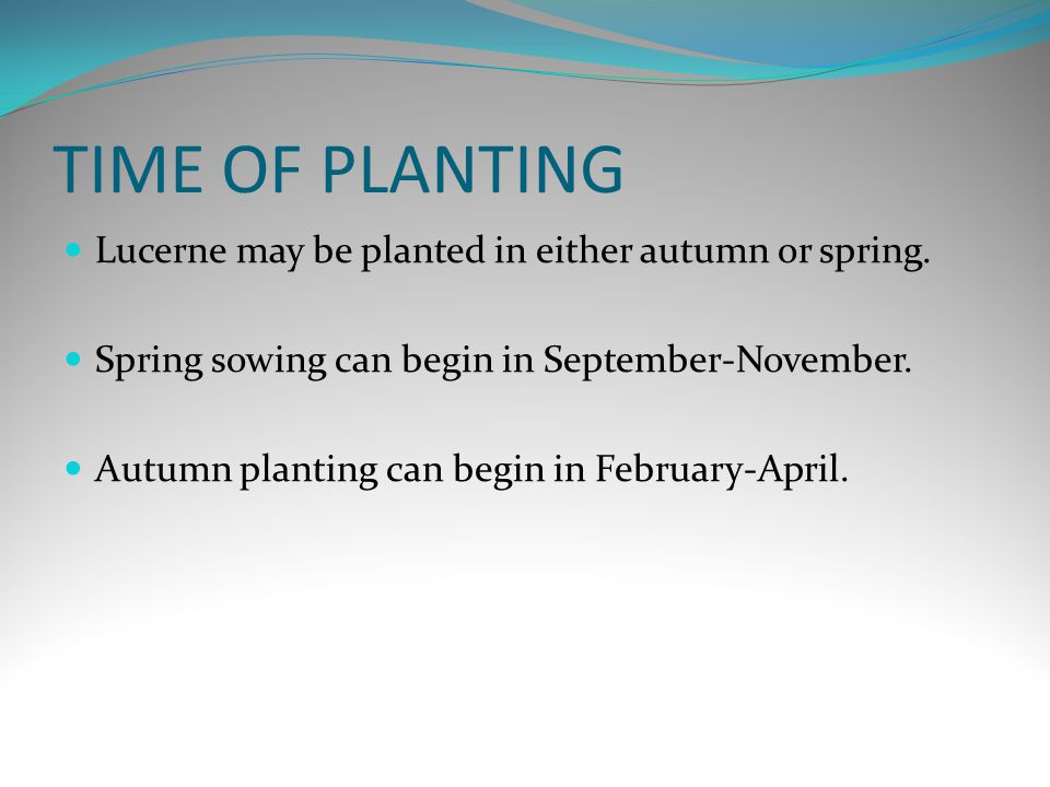 TIME OF PLANTING Lucerne may be planted in either autumn or spring.