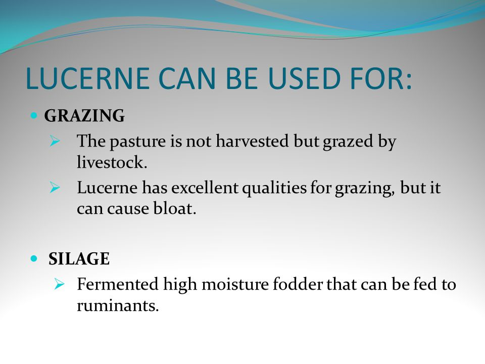 LUCERNE CAN BE USED FOR: GRAZING  The pasture is not harvested but grazed by livestock.