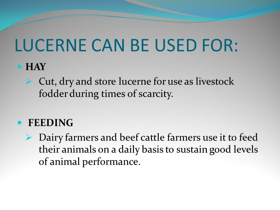 LUCERNE CAN BE USED FOR: HAY  Cut, dry and store lucerne for use as livestock fodder during times of scarcity.