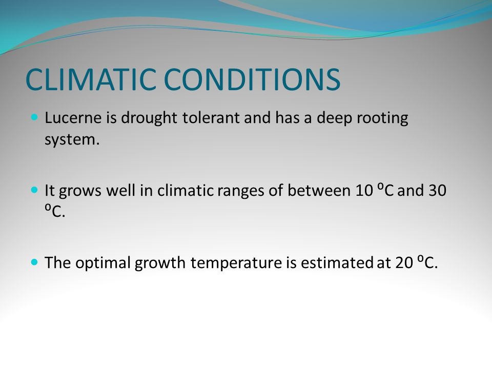 CLIMATIC CONDITIONS Lucerne is drought tolerant and has a deep rooting system.