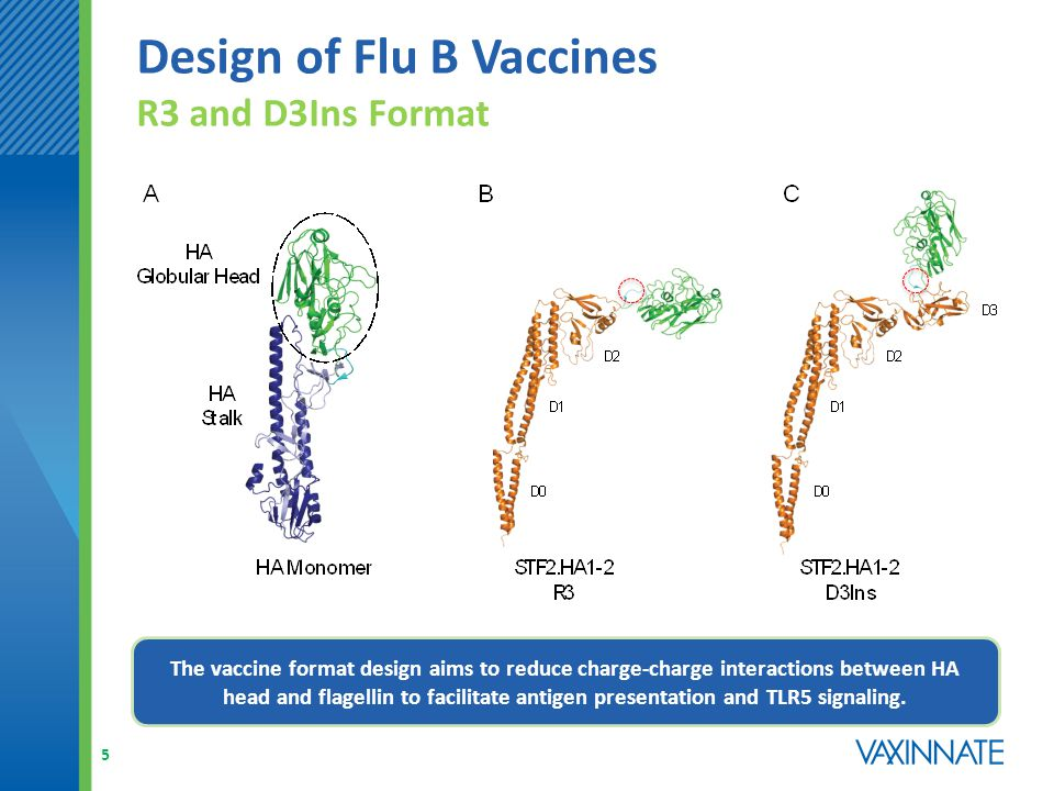 Design of Flu B Vaccines R3 and D3Ins Format 5 The vaccine format design aims to reduce charge-charge interactions between HA head and flagellin to facilitate antigen presentation and TLR5 signaling.