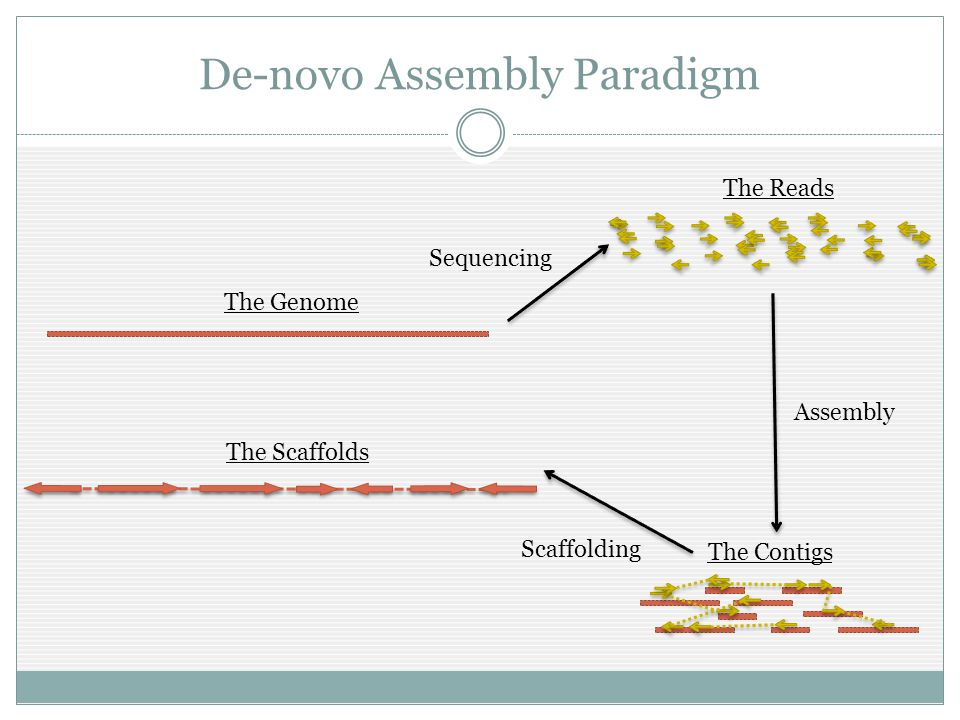 De-novo Assembly Paradigm Sequencing The Contigs The Scaffolds The Reads The Genome Assembly Scaffolding