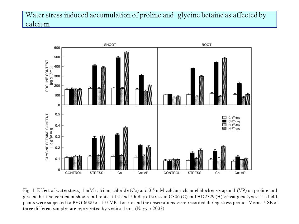 Water stress induced accumulation of proline and glycine betaine as affected by calcium Fig.