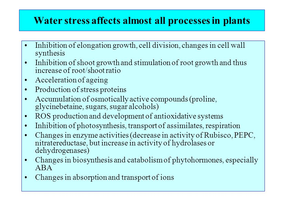 Water stress affects almost all processes in plants Inhibition of elongation growth, cell division, changes in cell wall synthesis Inhibition of shoot growth and stimulation of root growth and thus increase of root/shoot ratio Acceleration of ageing Production of stress proteins Accumulation of osmotically active compounds (proline, glycinebetaine, sugars, sugar alcohols) ROS production and development of antioxidative systems Inhibition of photosynthesis, transport of assimilates, respiration Changes in enzyme activities (decrease in activity of Rubisco, PEPC, nitratereductase, but increase in activity of hydrolases or dehydrogenases) Changes in biosynthesis and catabolism of phytohormones, especially ABA Changes in absorption and transport of ions
