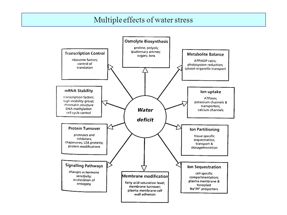 Multiple effects of water stress