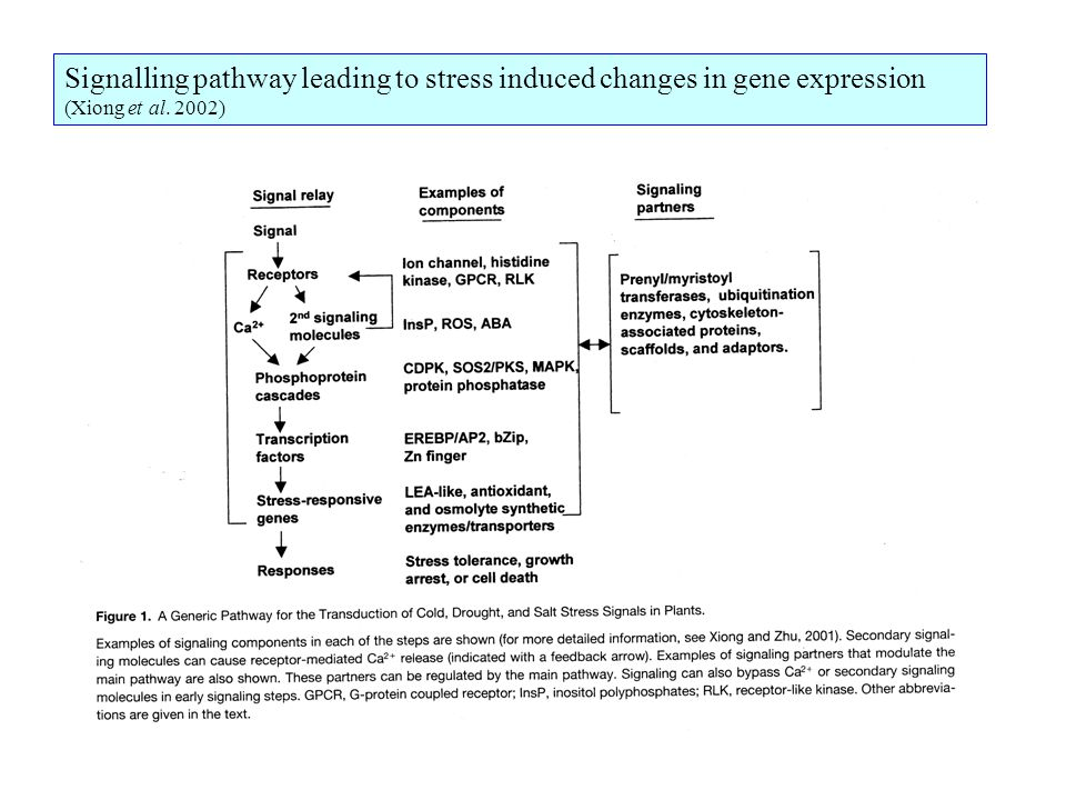 Signalling pathway leading to stress induced changes in gene expression (Xiong et al. 2002)