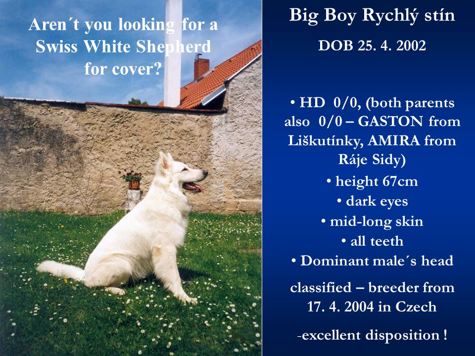Aren´t you looking for a Swiss White Shepherd for cover.
