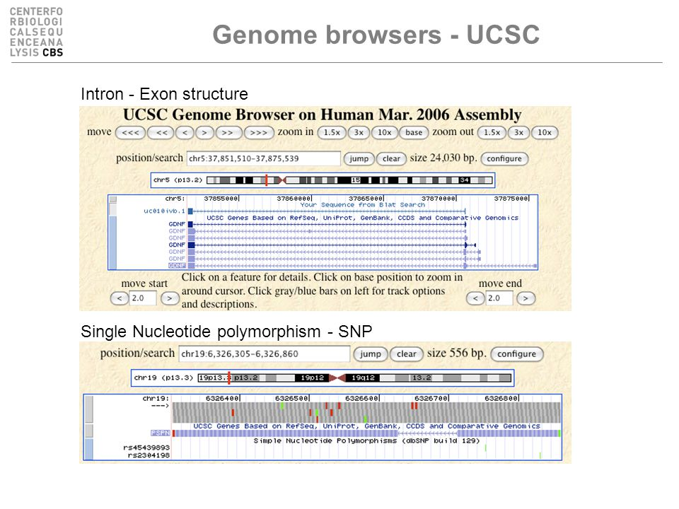 Genome browsers - UCSC Intron - Exon structure Single Nucleotide polymorphism - SNP