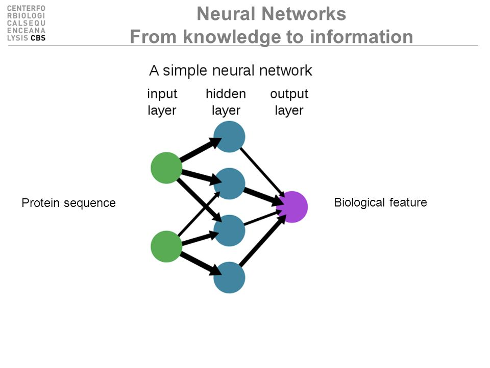 Neural Networks From knowledge to information Protein sequence Biological feature