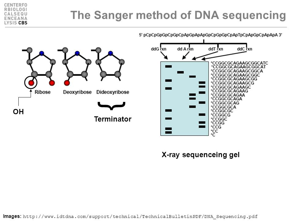 The Sanger method of DNA sequencing Images: http://www.idtdna.com/support/technical/TechnicalBulletinPDF/DNA_Sequencing.pdf } Terminator X-ray sequenceing gel OH