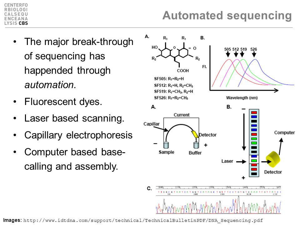 Automated sequencing The major break-through of sequencing has happended through automation.